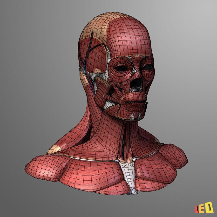 Anatomie complète de la tête masculine royalty-free 3d model - Preview no. 9