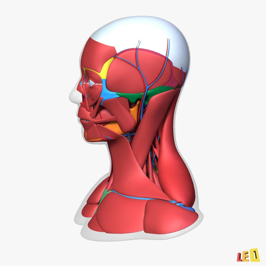 Anatomie complète de la tête masculine royalty-free 3d model - Preview no. 22
