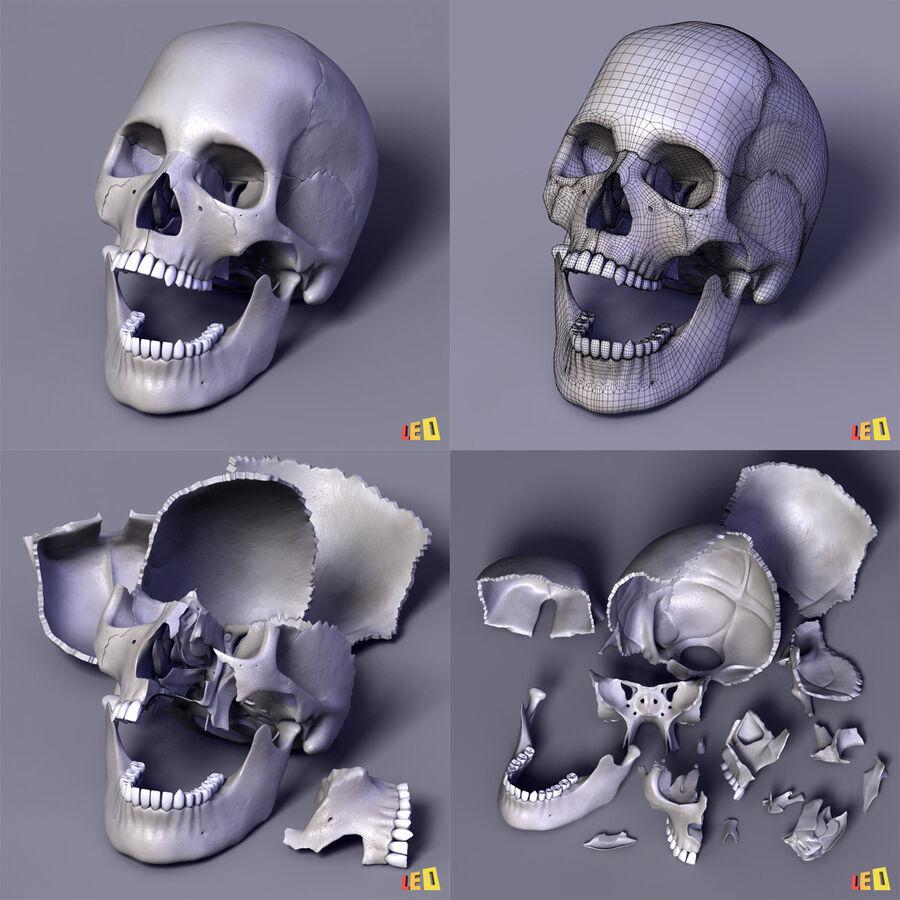 Anatomie complète de la tête masculine royalty-free 3d model - Preview no. 28