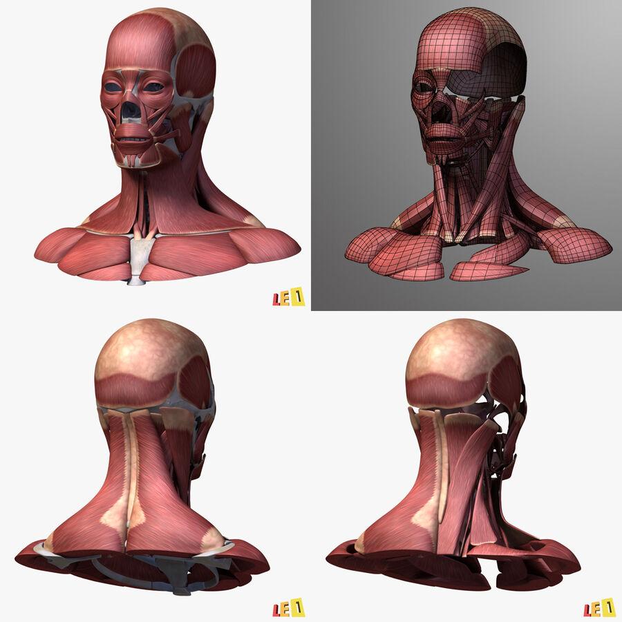 Anatomie complète de la tête masculine royalty-free 3d model - Preview no. 37