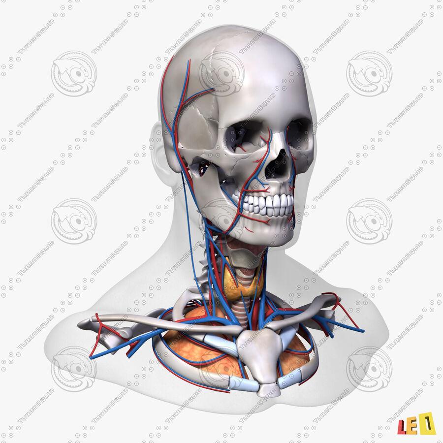 Anatomie complète de la tête masculine royalty-free 3d model - Preview no. 4