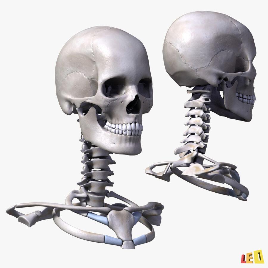 Anatomie complète de la tête masculine royalty-free 3d model - Preview no. 25
