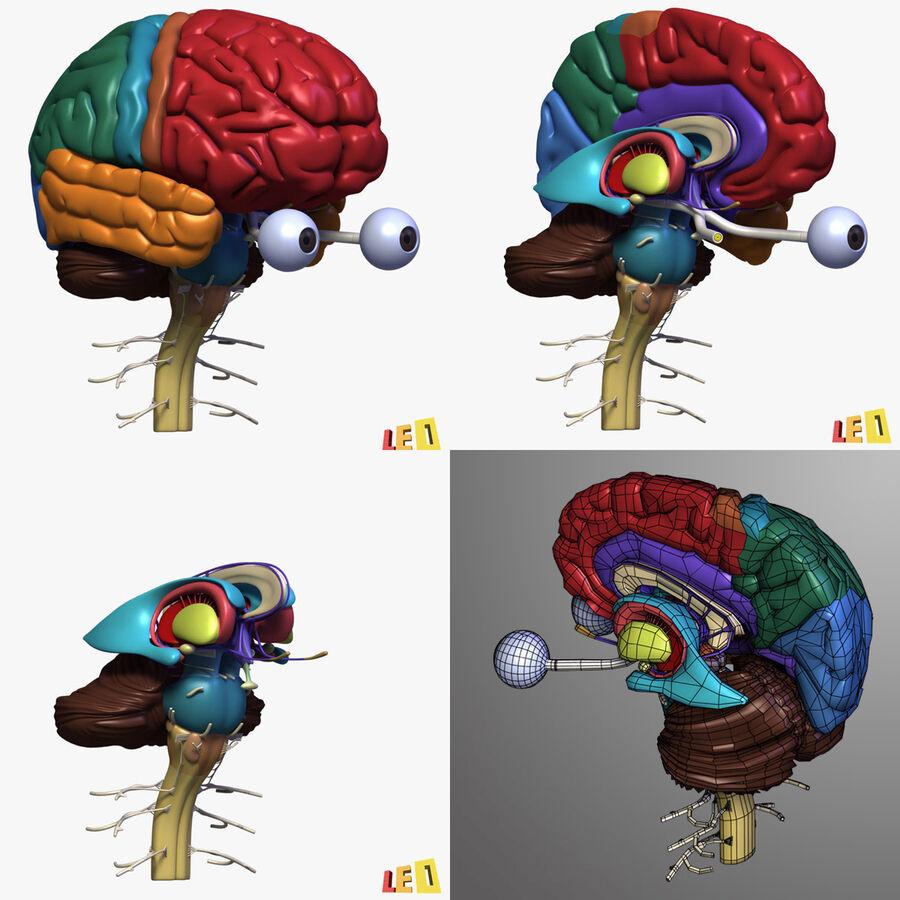 Anatomie complète de la tête masculine royalty-free 3d model - Preview no. 32