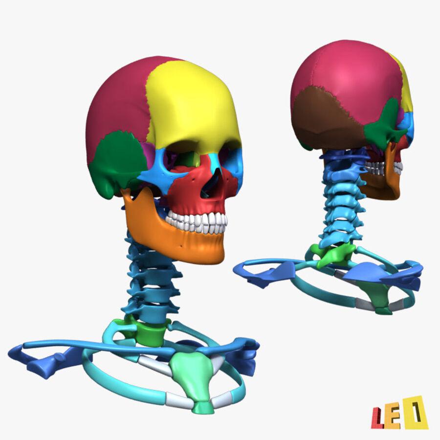 Anatomie complète de la tête masculine royalty-free 3d model - Preview no. 27