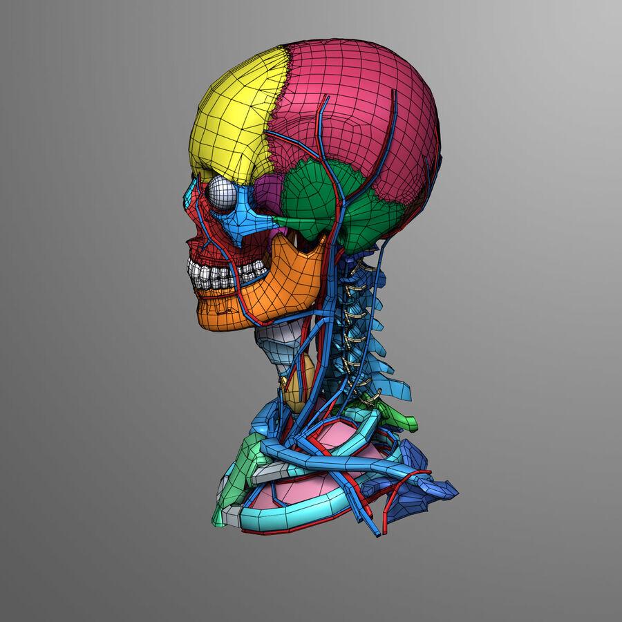 Anatomie complète de la tête masculine royalty-free 3d model - Preview no. 23