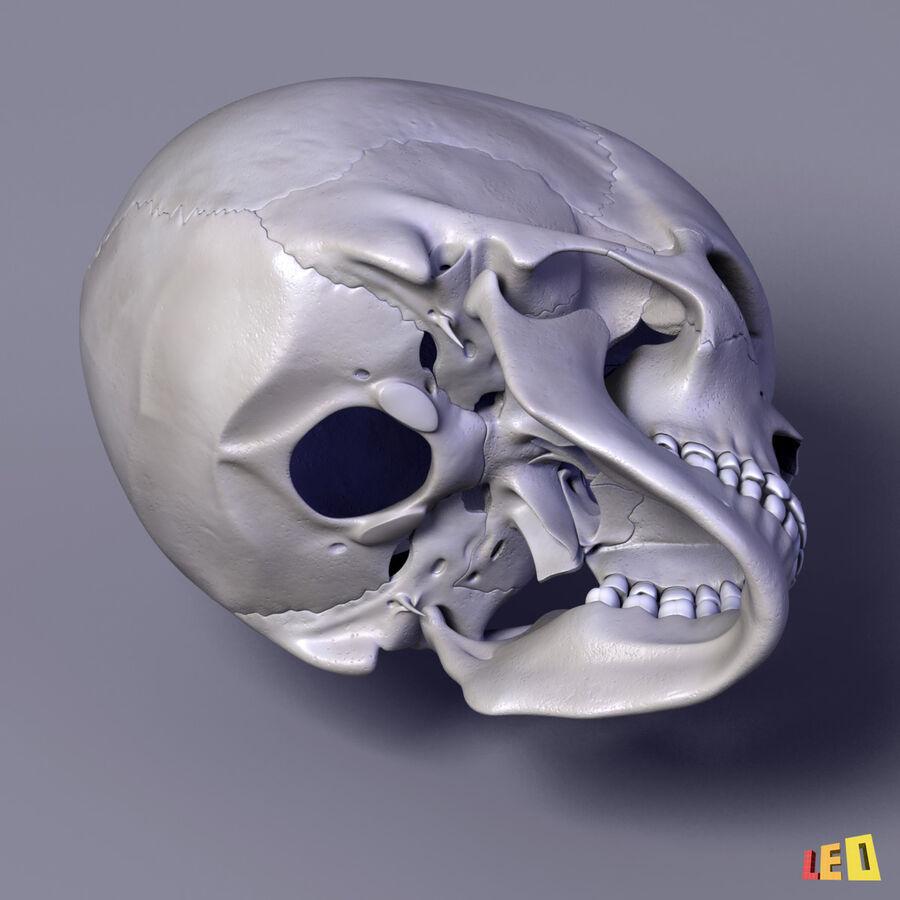 Anatomie complète de la tête masculine royalty-free 3d model - Preview no. 29