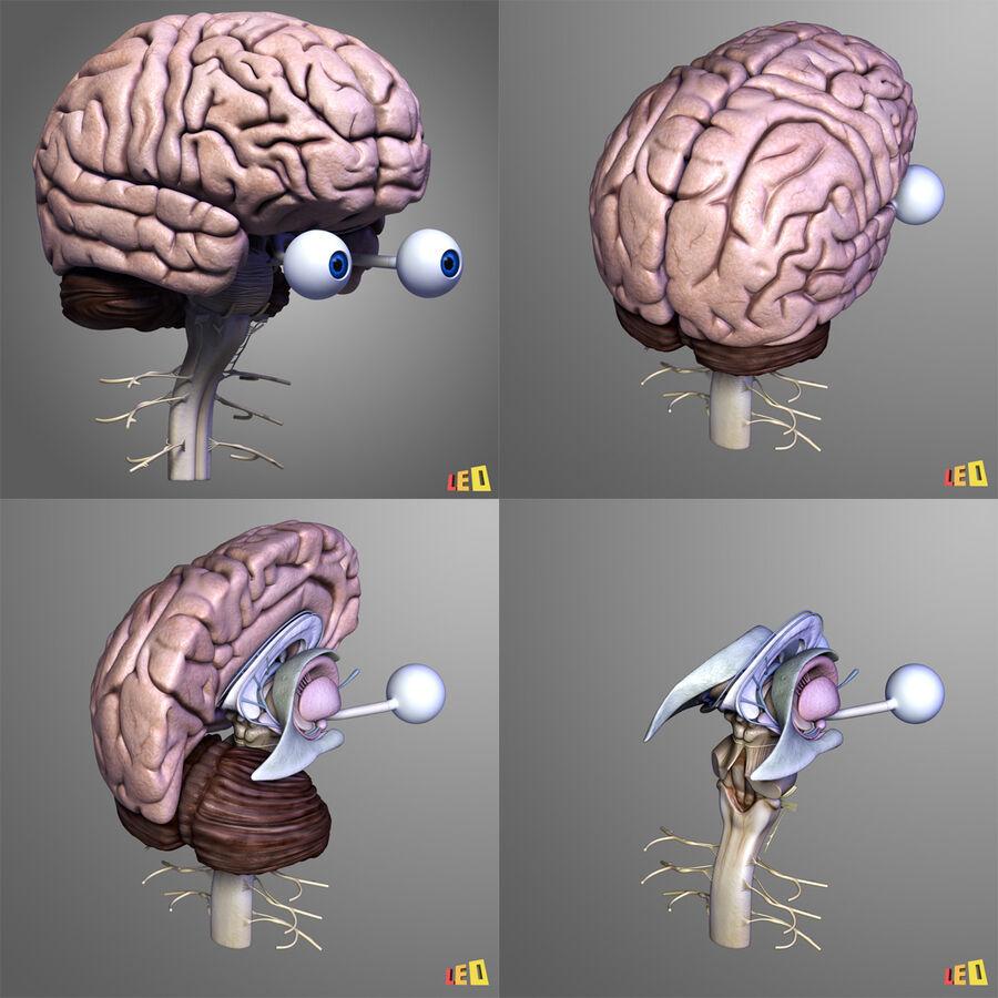 Anatomie complète de la tête masculine royalty-free 3d model - Preview no. 31