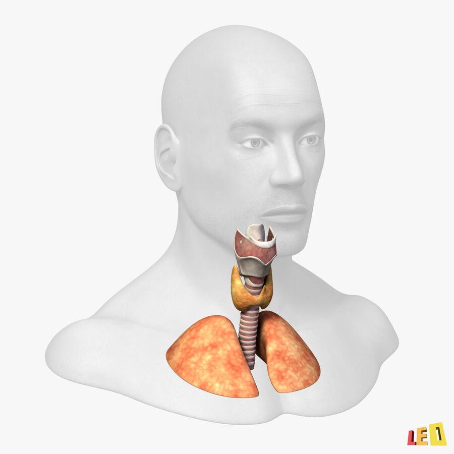 Anatomie complète de la tête masculine royalty-free 3d model - Preview no. 7