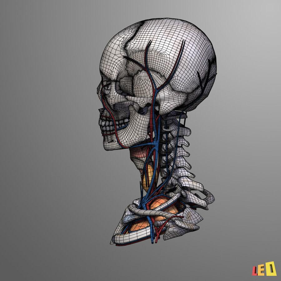 Anatomie complète de la tête masculine royalty-free 3d model - Preview no. 16