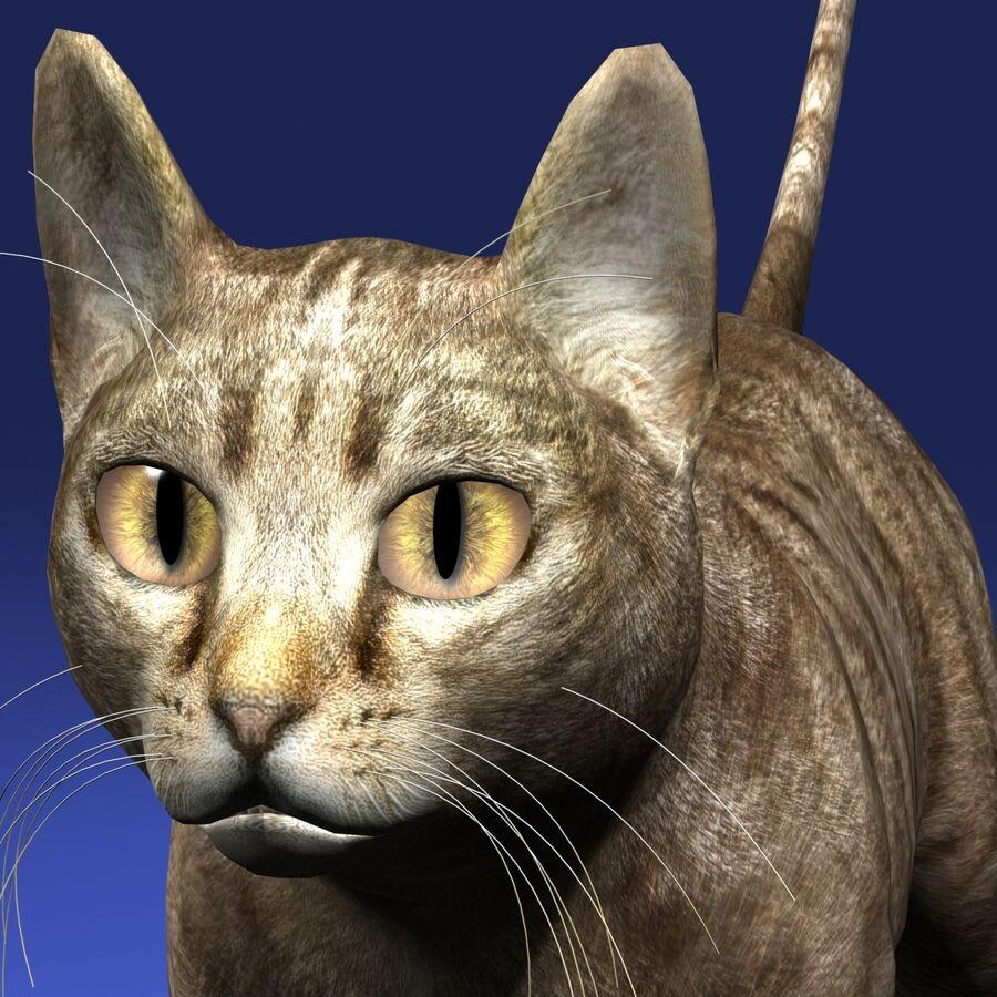 Cat Orange royalty-free 3d model - Preview no. 7