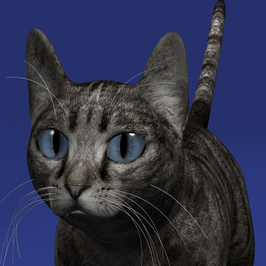 Cat Rigged royalty-free 3d model - Preview no. 4