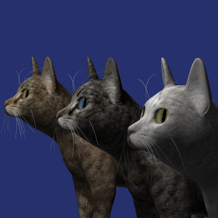 Cat Rigged royalty-free 3d model - Preview no. 10