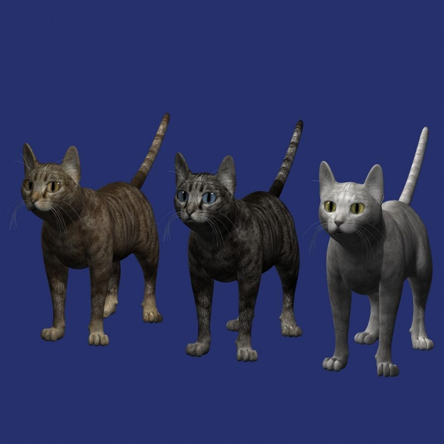 Cat Rigged royalty-free 3d model - Preview no. 9