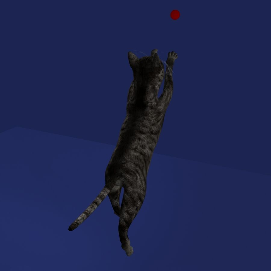 Cat Rigged royalty-free 3d model - Preview no. 14