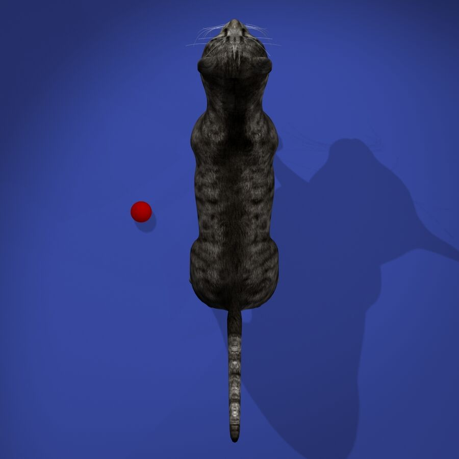 Cat Rigged royalty-free 3d model - Preview no. 7