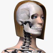 Женское тело и скелет 3d model