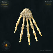 手骨头 3d model