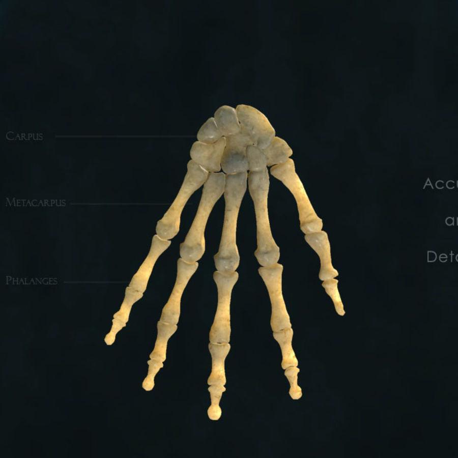 Hand Bones 3d Model 25 X Fbx Obj Free3d