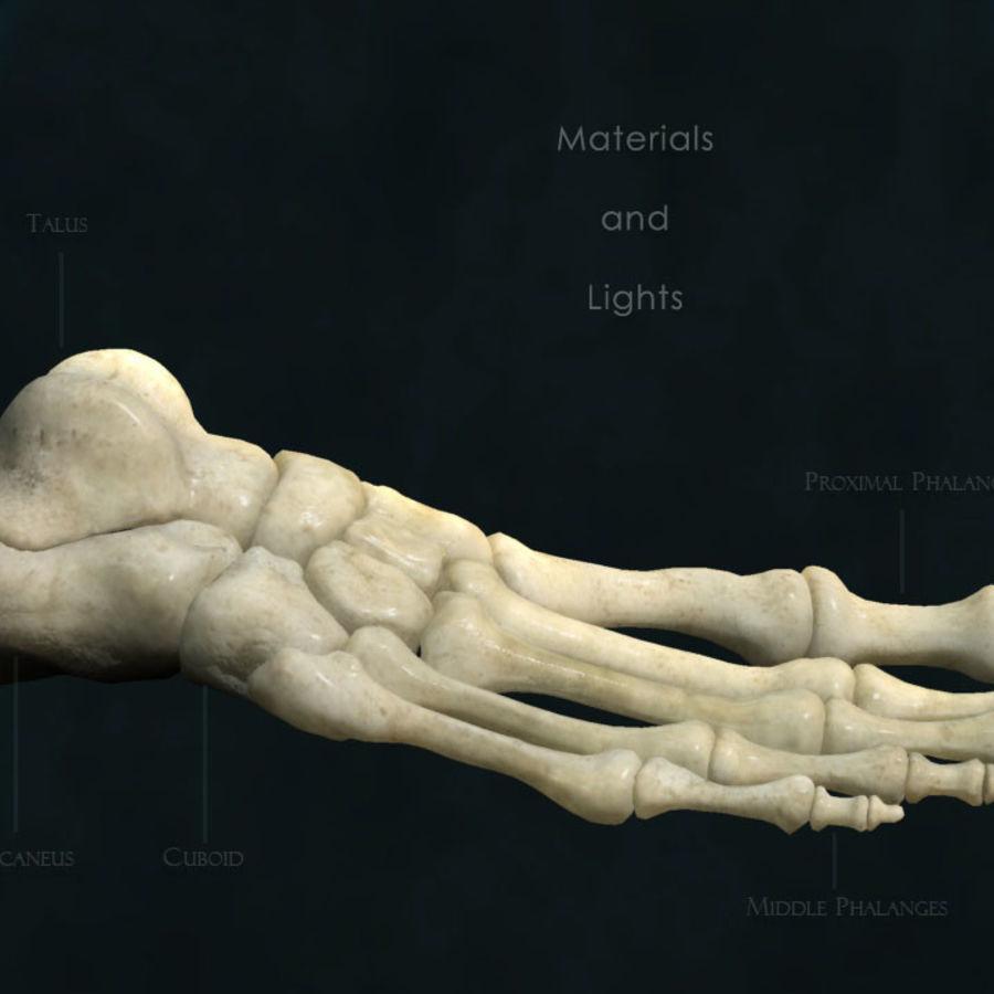 Foot bones royalty-free 3d model - Preview no. 4