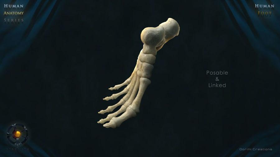 Foot bones royalty-free 3d model - Preview no. 6