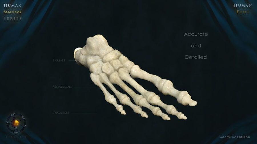 Foot bones royalty-free 3d model - Preview no. 3