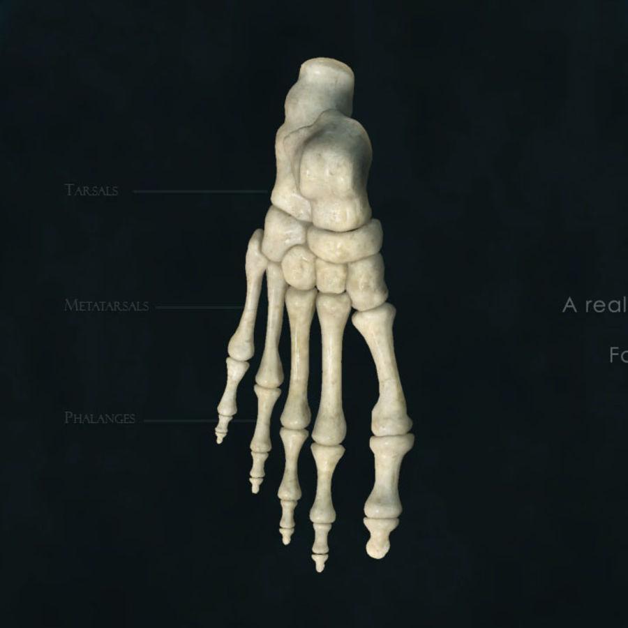 Foot bones royalty-free 3d model - Preview no. 2