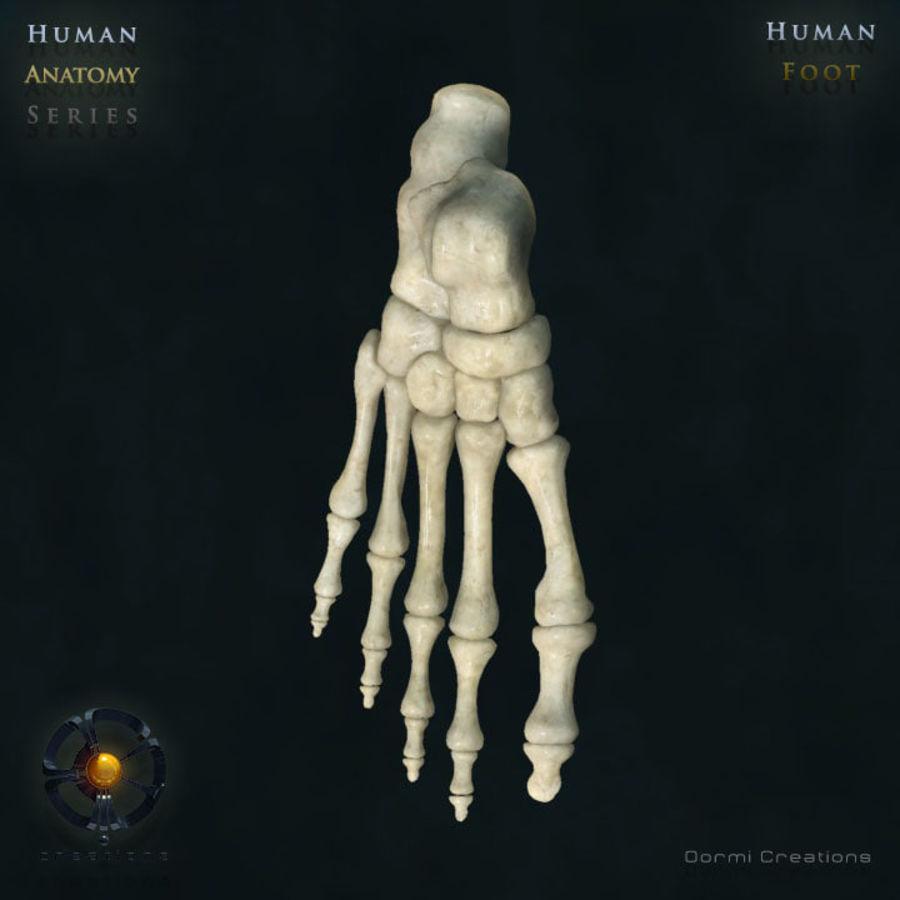 Foot bones royalty-free 3d model - Preview no. 1