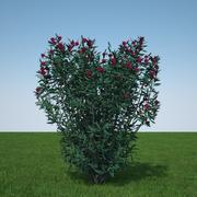 Neriumoleander rot 3d model