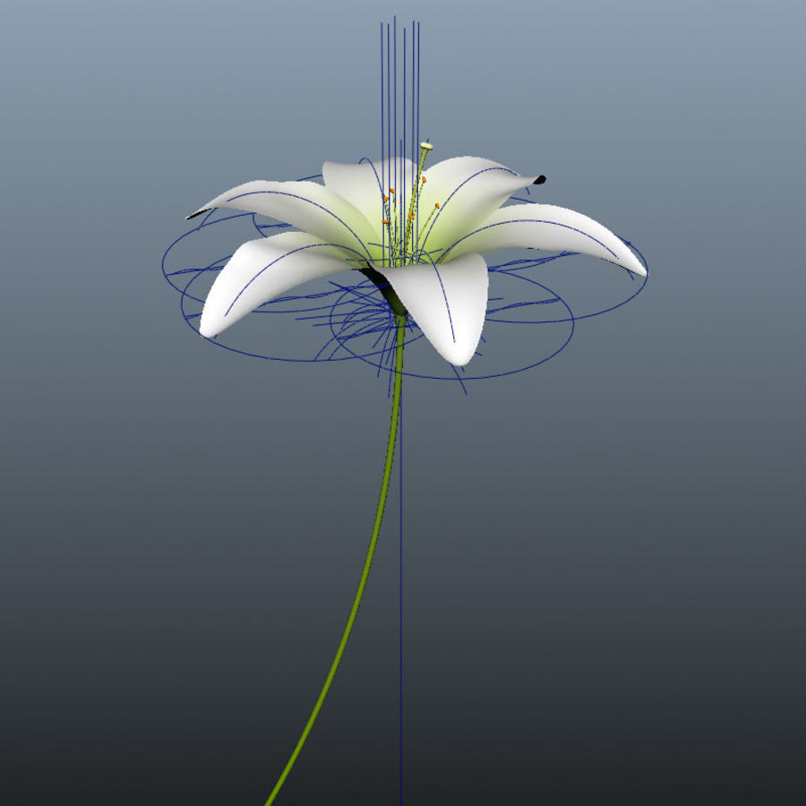 Blooming Lily Flower royalty-free 3d model - Preview no. 7