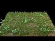 grass flowers ground 3d model