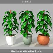 MONEY PLANT 3d model