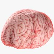Realistisk hjärna 3d model