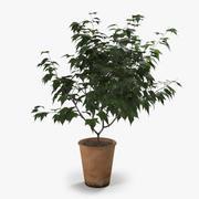 Декоративное дерево 2 3d model