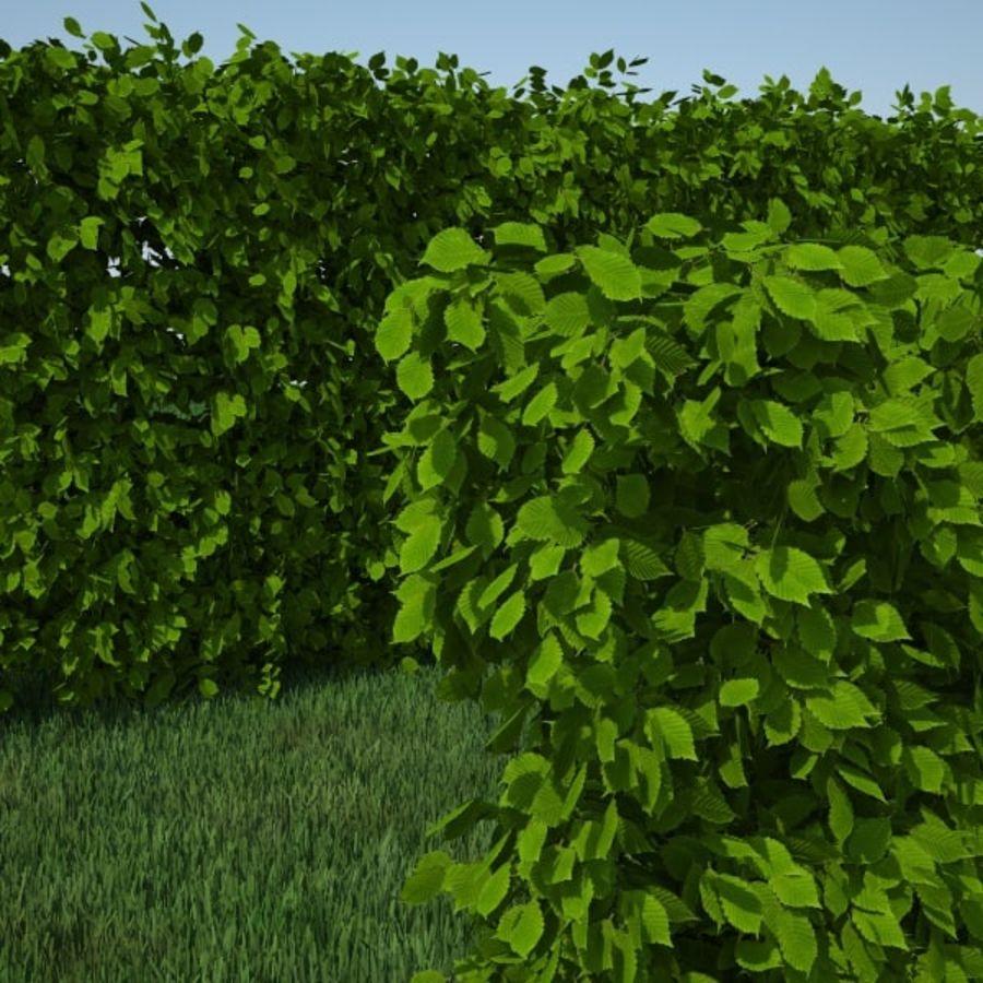 Carpinus Betulus Hedge Kit royalty-free 3d model - Preview no. 8