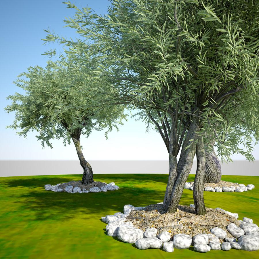 Cena de planta de árvore realista Olea royalty-free 3d model - Preview no. 3