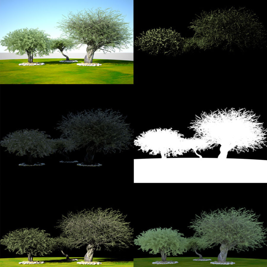 Olea 현실적인 나무 식물 장면 royalty-free 3d model - Preview no. 10