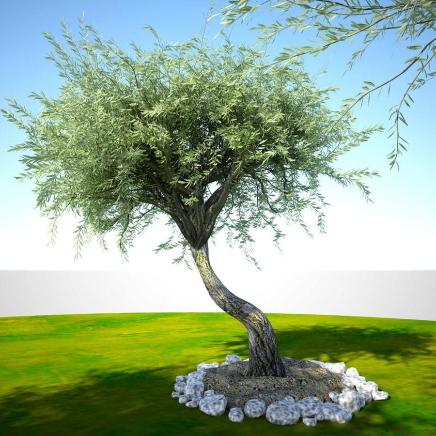 Olea 현실적인 나무 식물 장면 royalty-free 3d model - Preview no. 5