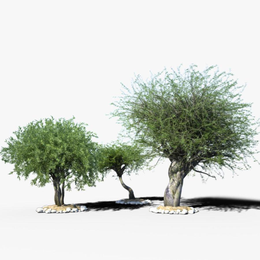 Olea 현실적인 나무 식물 장면 royalty-free 3d model - Preview no. 1