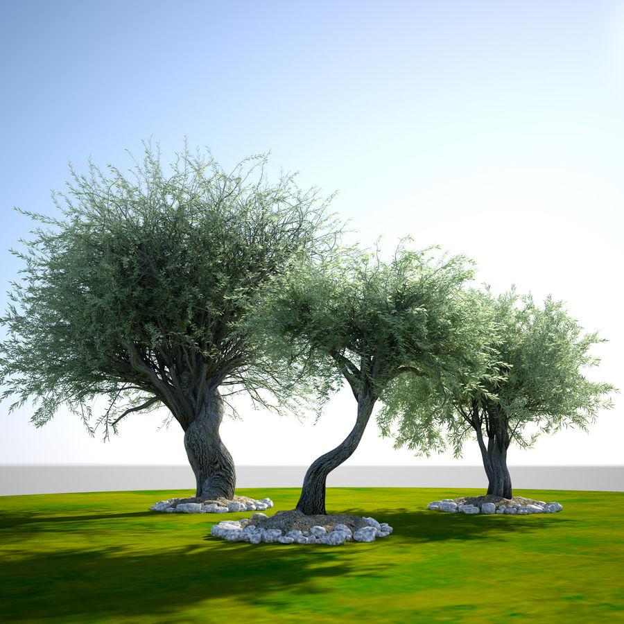 Cena de planta de árvore realista Olea royalty-free 3d model - Preview no. 7