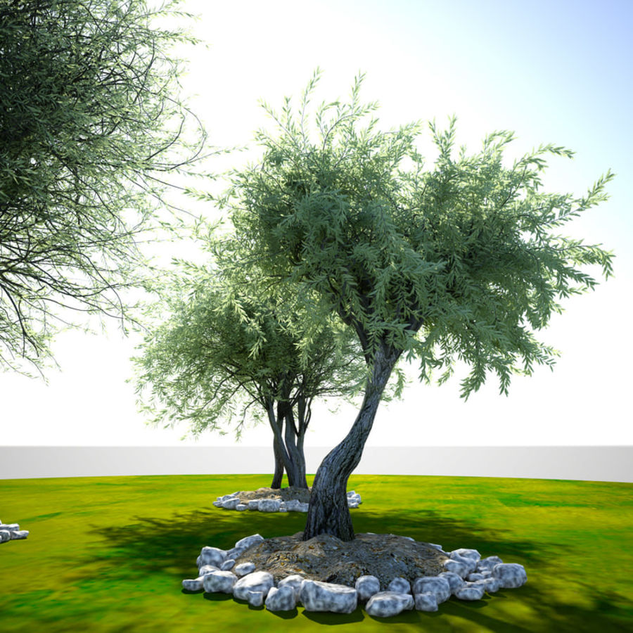 Olea 현실적인 나무 식물 장면 royalty-free 3d model - Preview no. 4