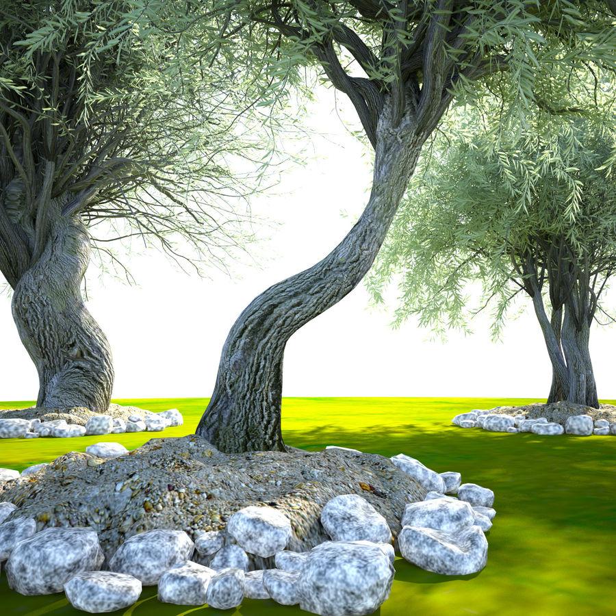 Cena de planta de árvore realista Olea royalty-free 3d model - Preview no. 9