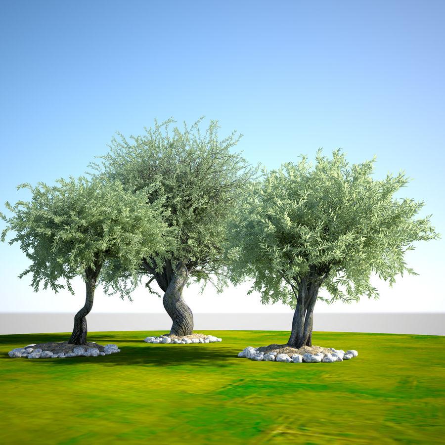 Cena de planta de árvore realista Olea royalty-free 3d model - Preview no. 6