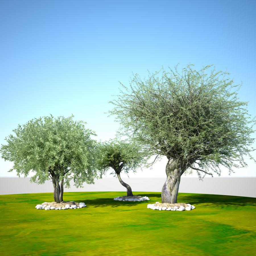 Cena de planta de árvore realista Olea royalty-free 3d model - Preview no. 1