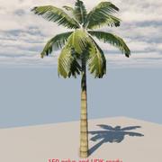 пальма 45 3d model