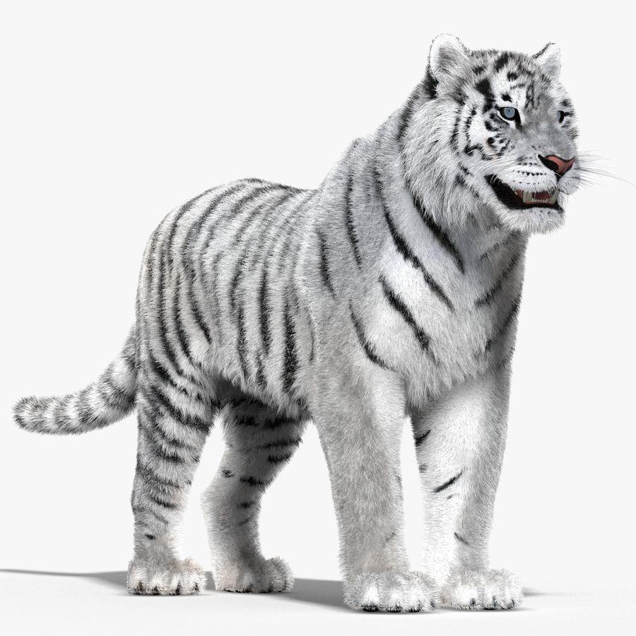 Tigre Branco (Pele) royalty-free 3d model - Preview no. 4