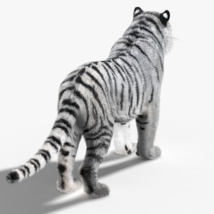 Tigre Branco (Pele) royalty-free 3d model - Preview no. 9