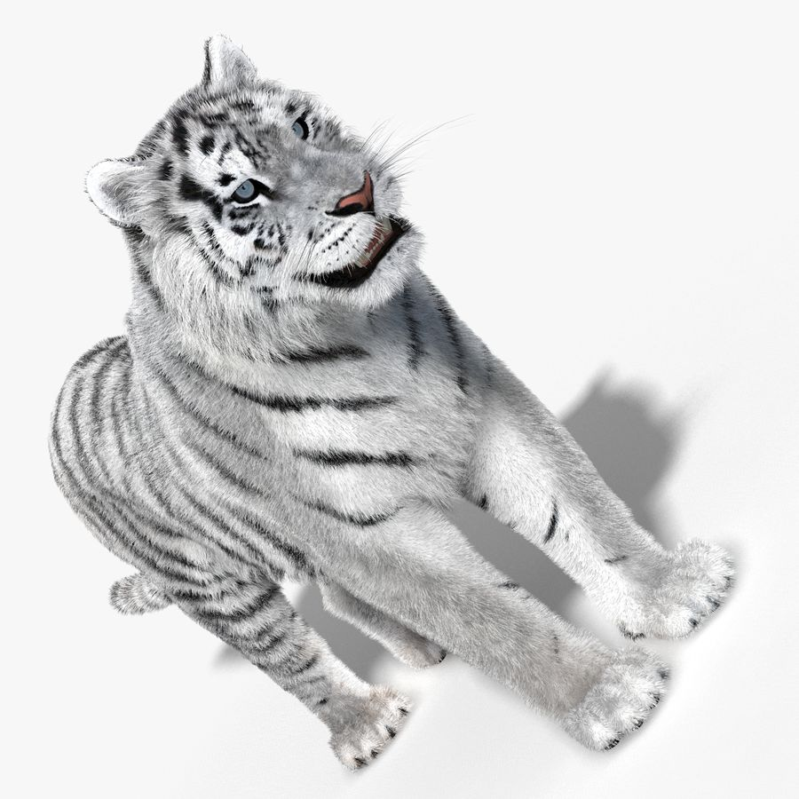 Tigre Branco (Pele) royalty-free 3d model - Preview no. 7