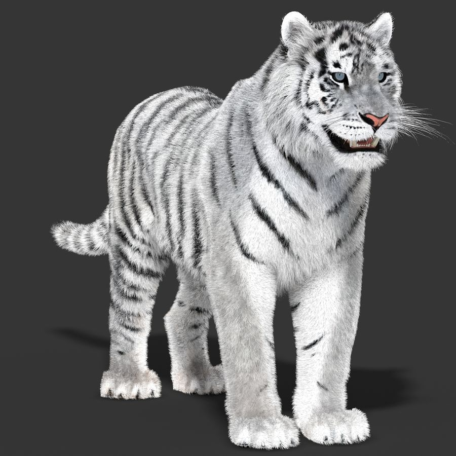 Tigre Branco (Pele) royalty-free 3d model - Preview no. 3