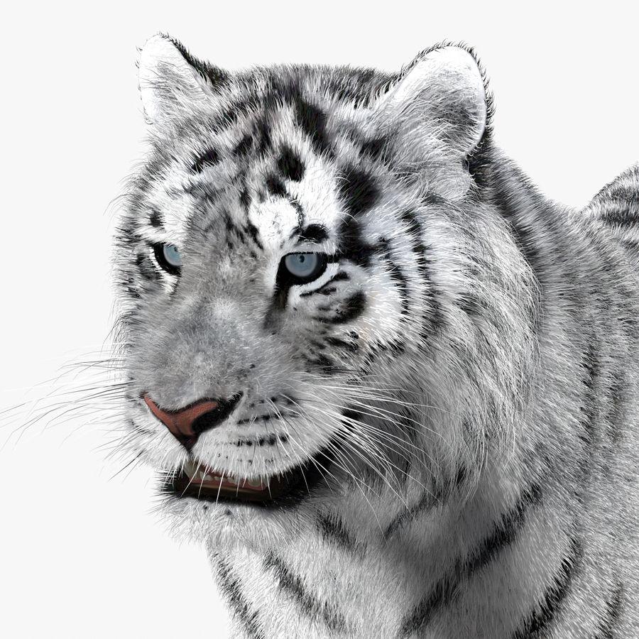 Tigre Branco (Pele) royalty-free 3d model - Preview no. 11