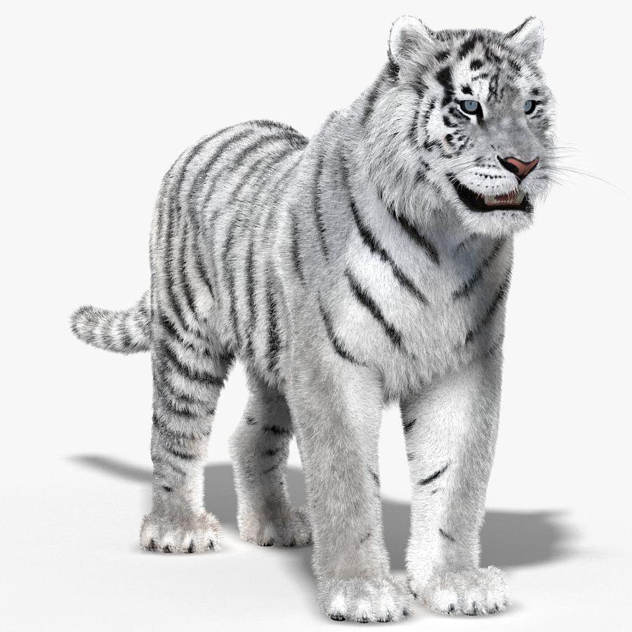 Tigre Branco (Pele) royalty-free 3d model - Preview no. 2